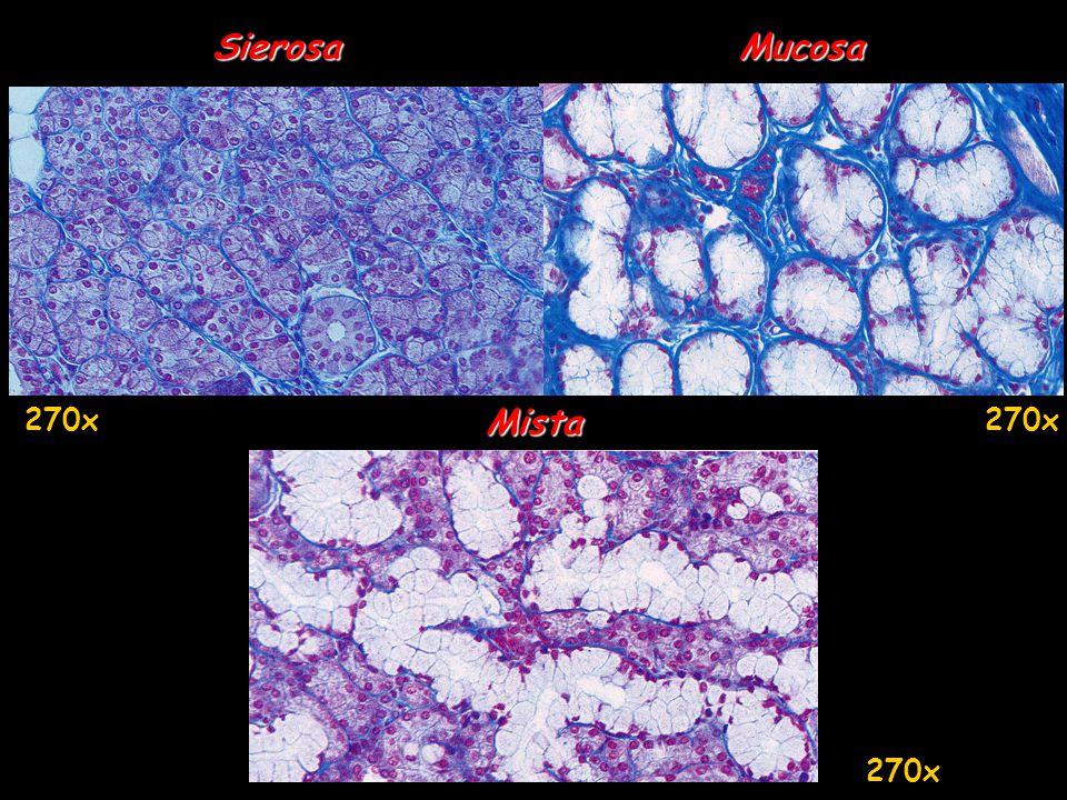 Sierosa Mucosa 270x Mista 270x 270x