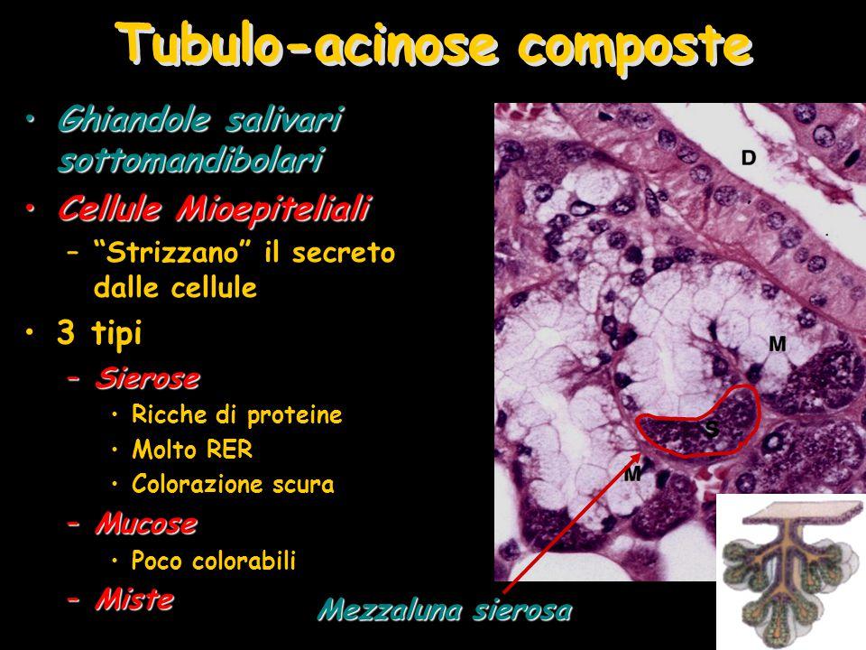 Tubulo-acinose composte