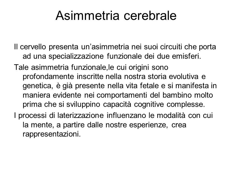 Asimmetria cerebrale Il cervello presenta un'asimmetria nei suoi circuiti che porta ad una specializzazione funzionale dei due emisferi.