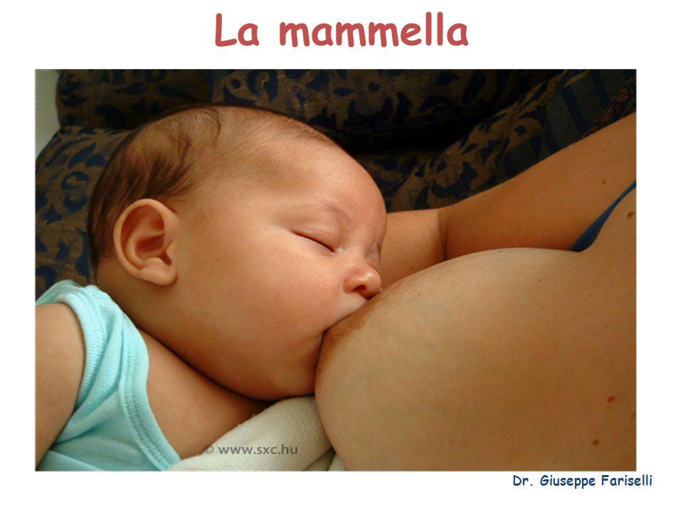 La mammella Dr. Giuseppe Fariselli