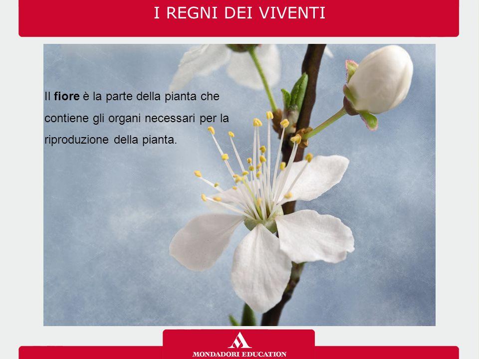 I REGNI DEI VIVENTI 03/07/12. Il fiore è la parte della pianta che contiene gli organi necessari per la riproduzione della pianta.
