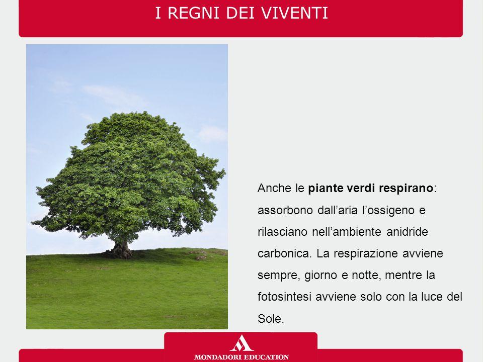 I REGNI DEI VIVENTI 03/07/12.