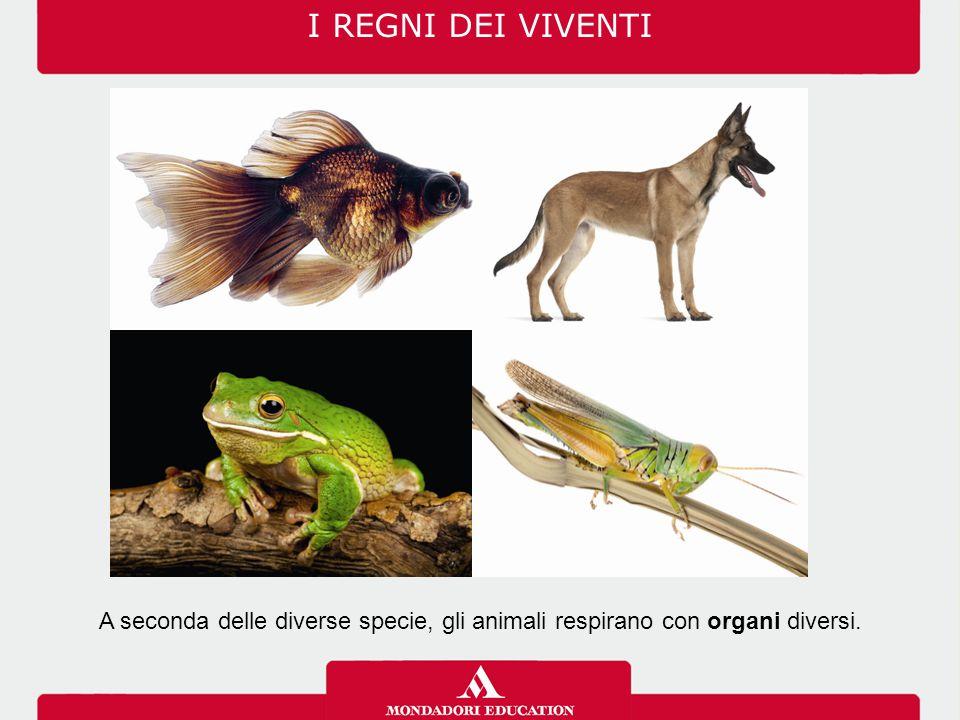 I REGNI DEI VIVENTI A seconda delle diverse specie, gli animali respirano con organi diversi.