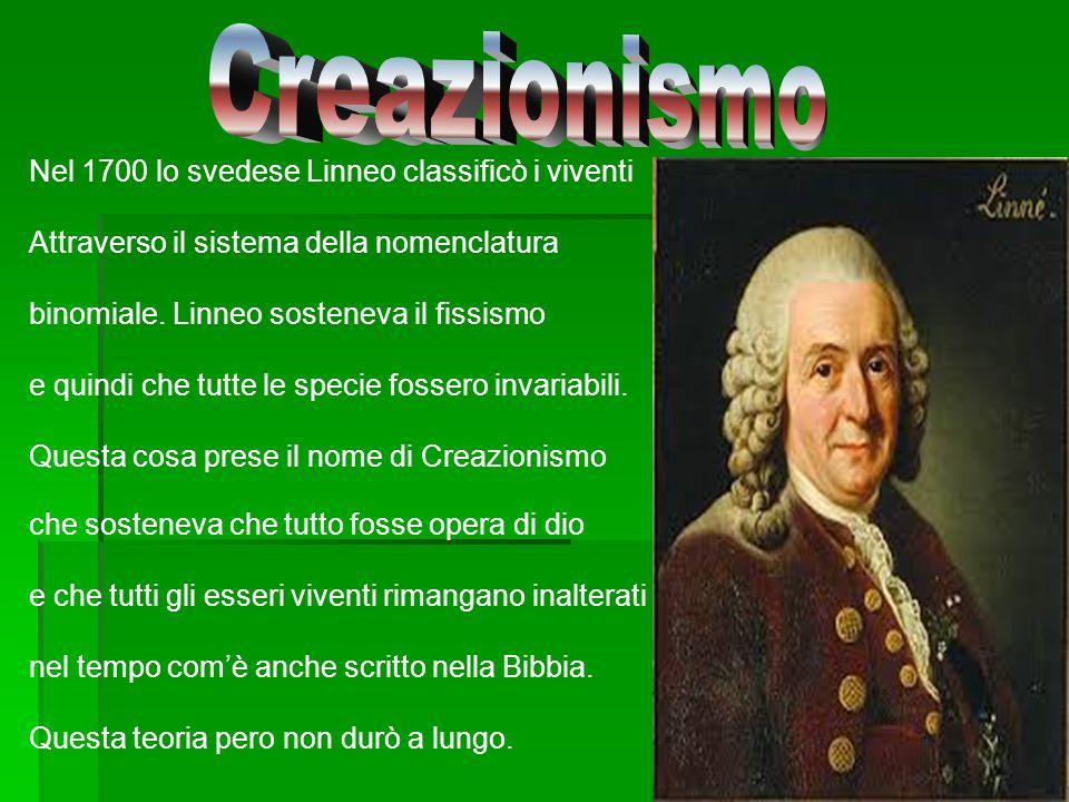 Creazionismo Nel 1700 lo svedese Linneo classificò i viventi