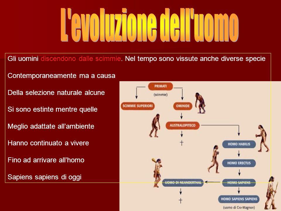 L evoluzione dell uomo Gli uomini discendono dalle scimmie. Nel tempo sono vissute anche diverse specie.