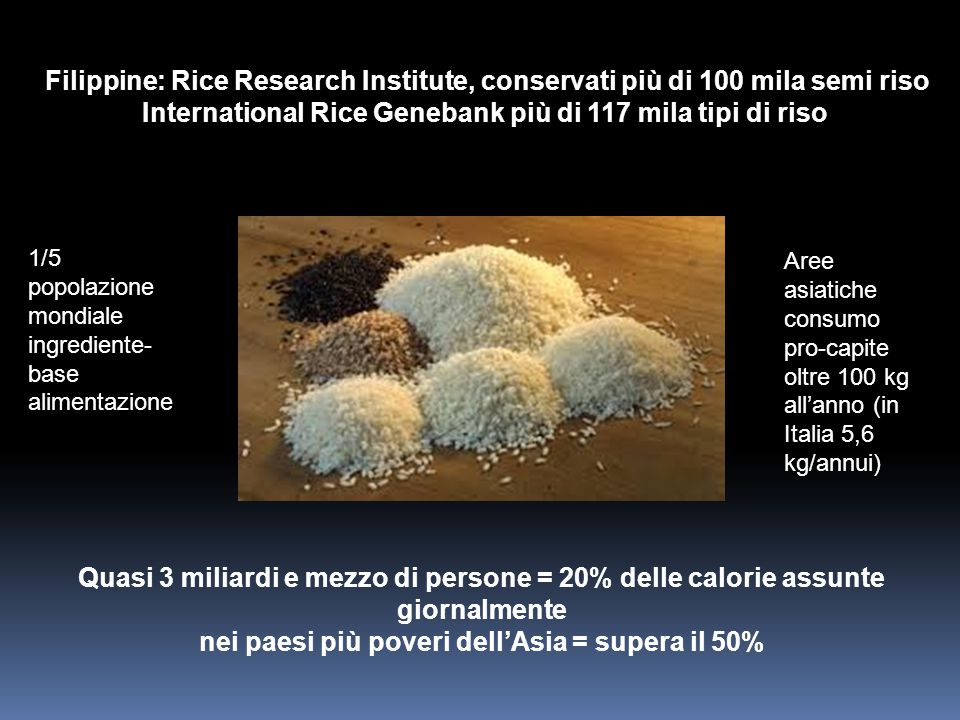 International Rice Genebank più di 117 mila tipi di riso