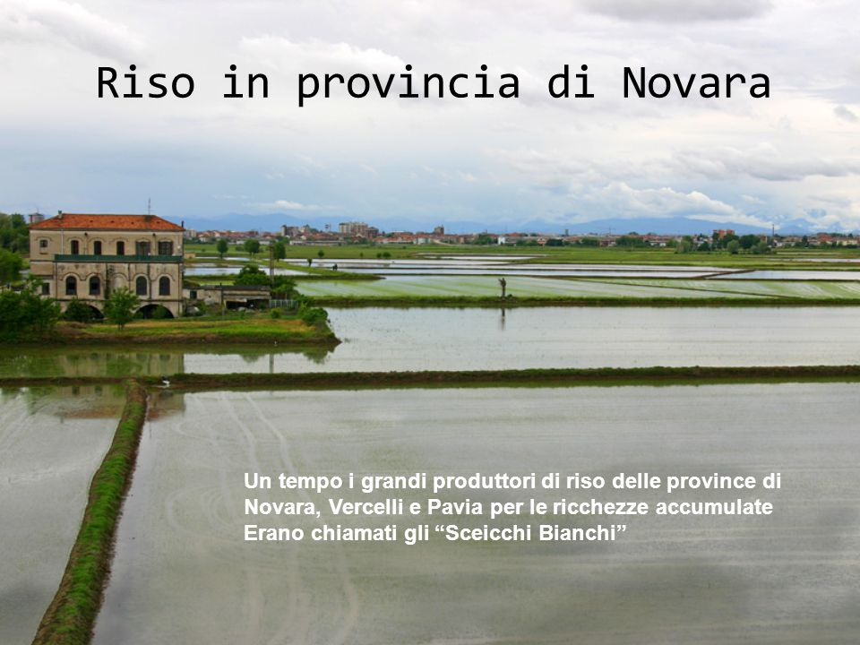 Riso in provincia di Novara