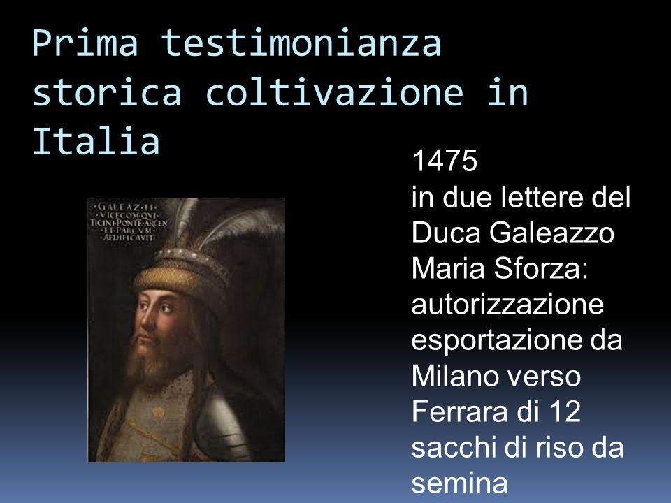 Prima testimonianza storica coltivazione in Italia