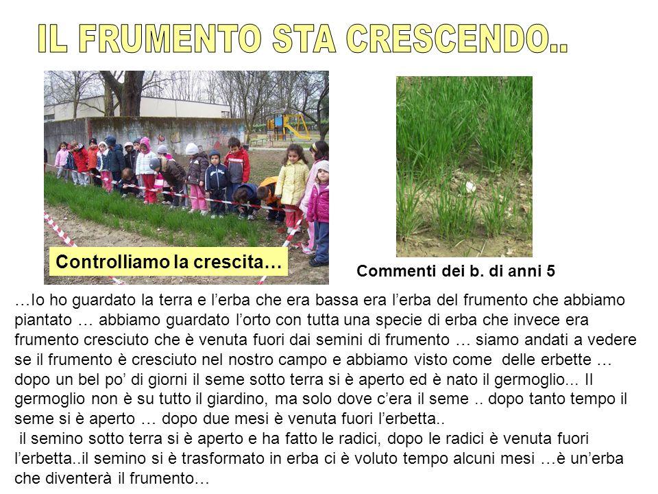 IL FRUMENTO STA CRESCENDO..