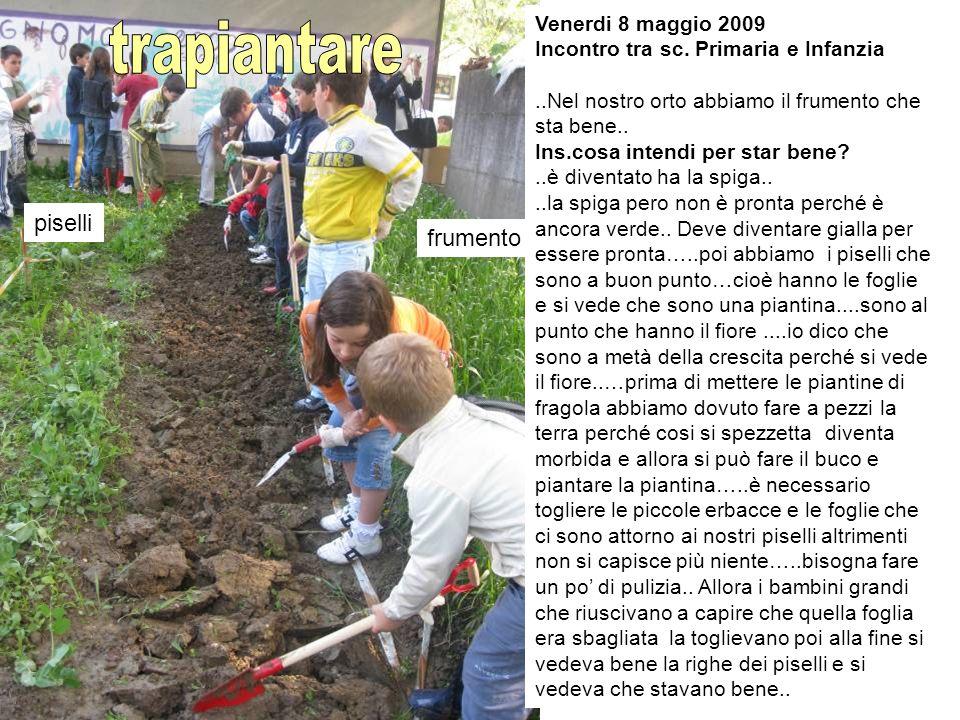 trapiantare piselli frumento Venerdi 8 maggio 2009