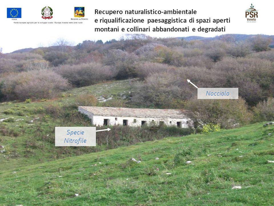 Recupero naturalistico-ambientale