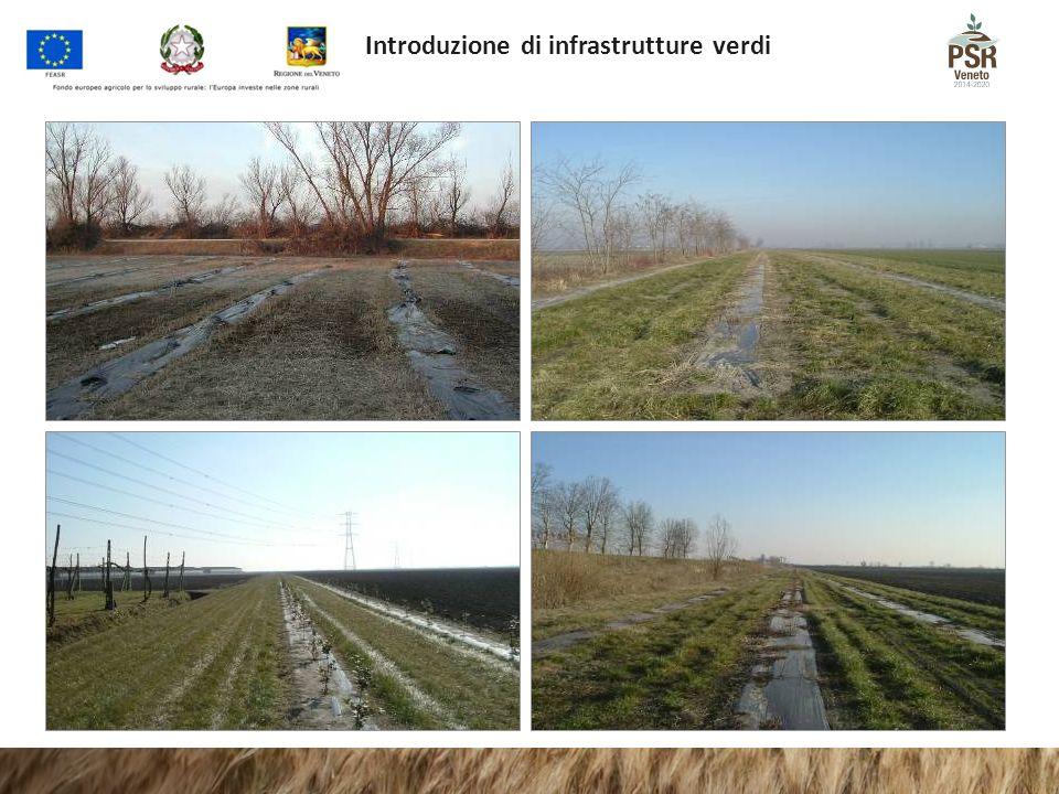 Introduzione di infrastrutture verdi