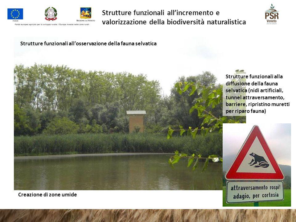 Strutture funzionali all'incremento e valorizzazione della biodiversità naturalistica