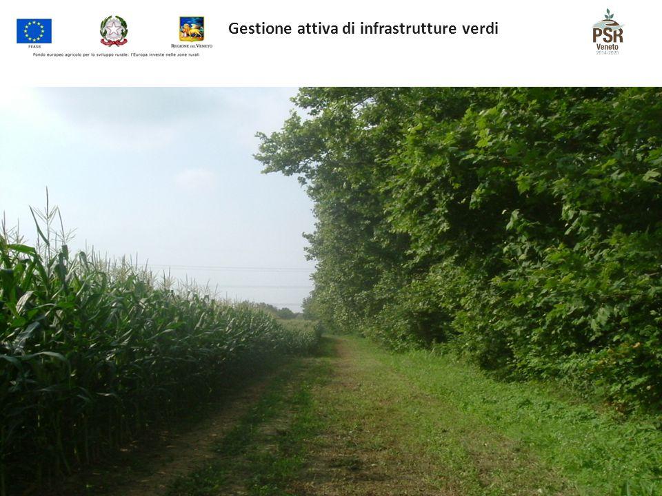 Gestione attiva di infrastrutture verdi