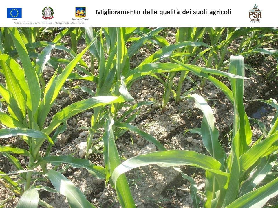 Miglioramento della qualità dei suoli agricoli