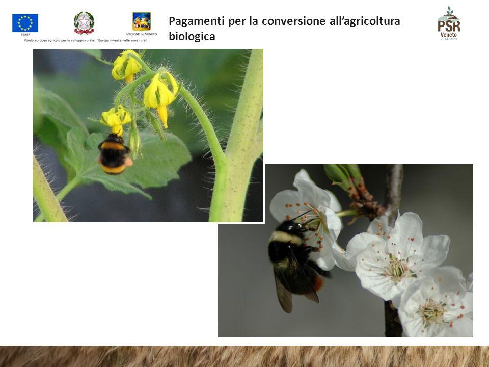Pagamenti per la conversione all'agricoltura biologica
