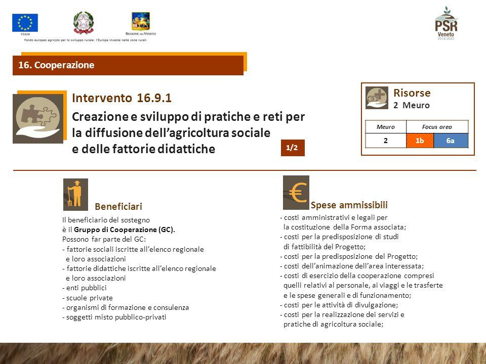 Creazione e sviluppo di pratiche e reti per