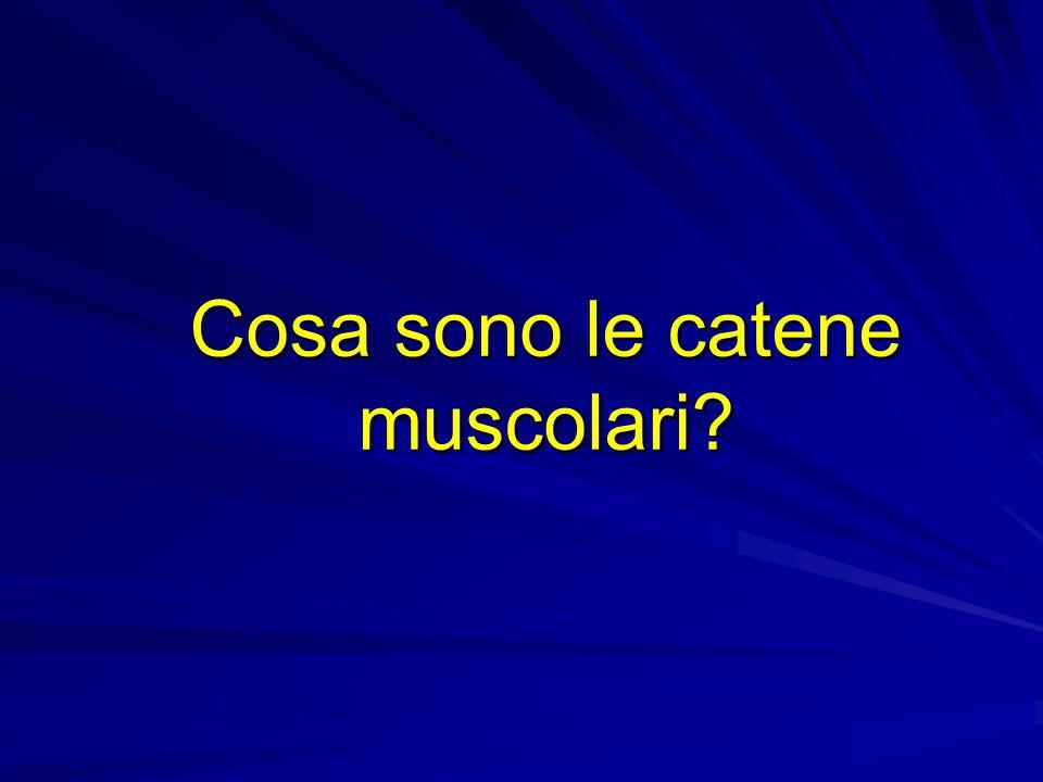 Cosa sono le catene muscolari
