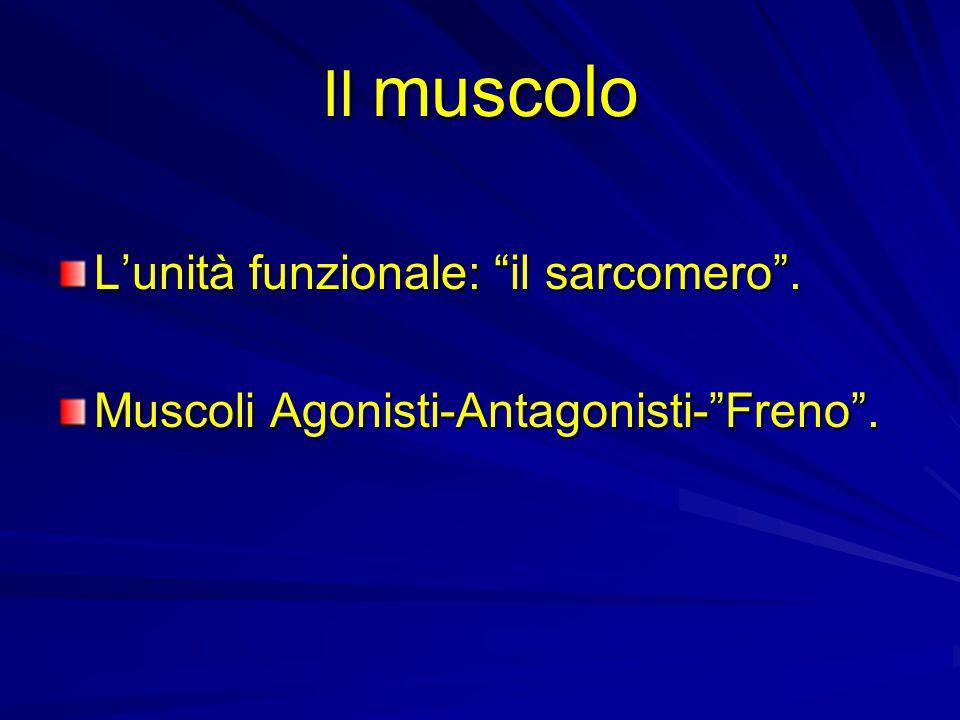 Il muscolo L'unità funzionale: il sarcomero .