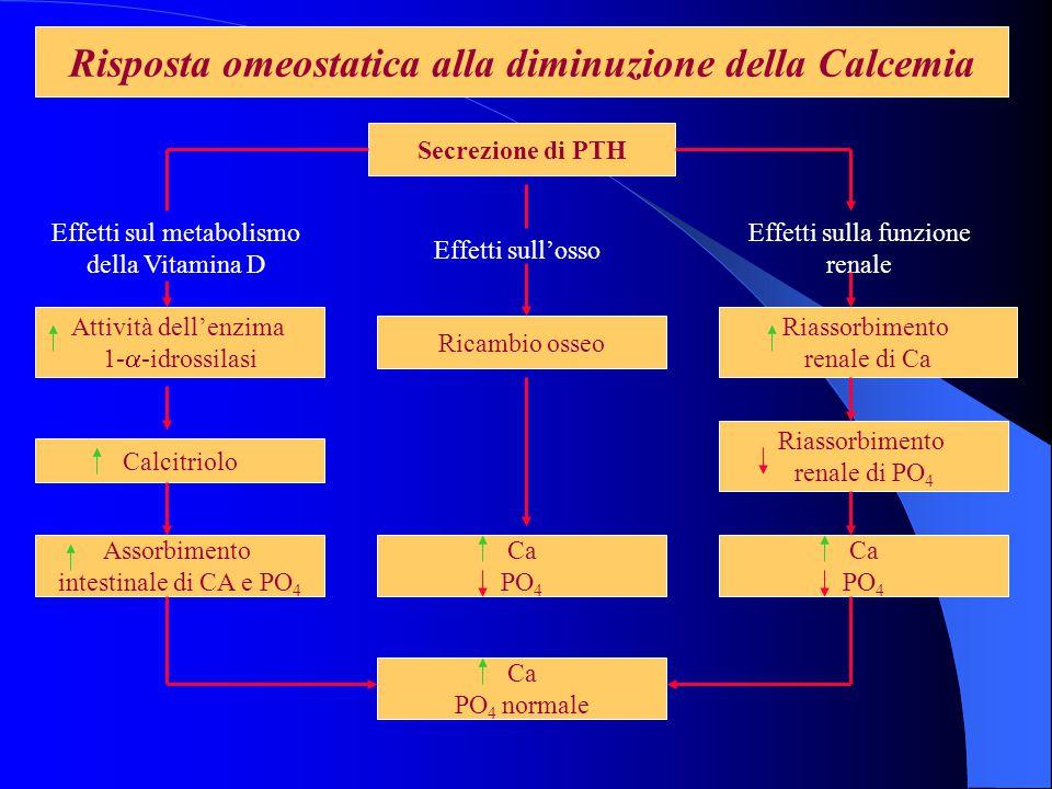 Risposta omeostatica alla diminuzione della Calcemia