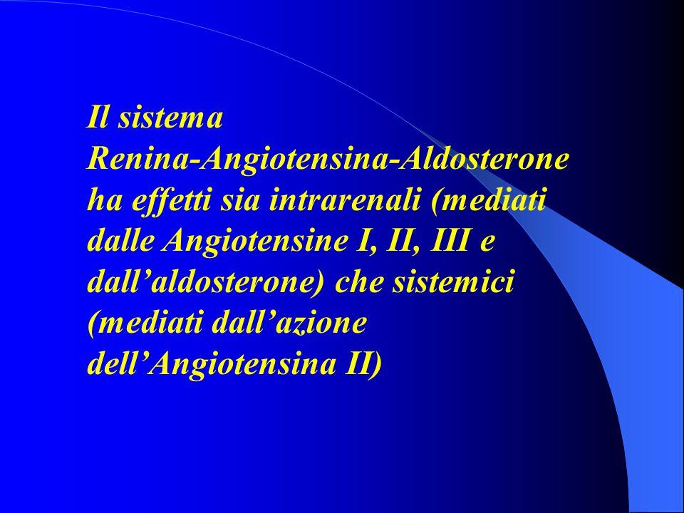 Il sistema Renina-Angiotensina-Aldosterone ha effetti sia intrarenali (mediati dalle Angiotensine I, II, III e dall'aldosterone) che sistemici (mediati dall'azione dell'Angiotensina II)