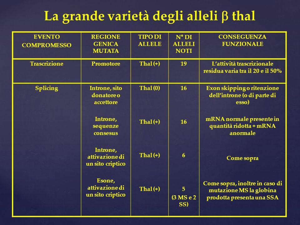 La grande varietà degli alleli b thal
