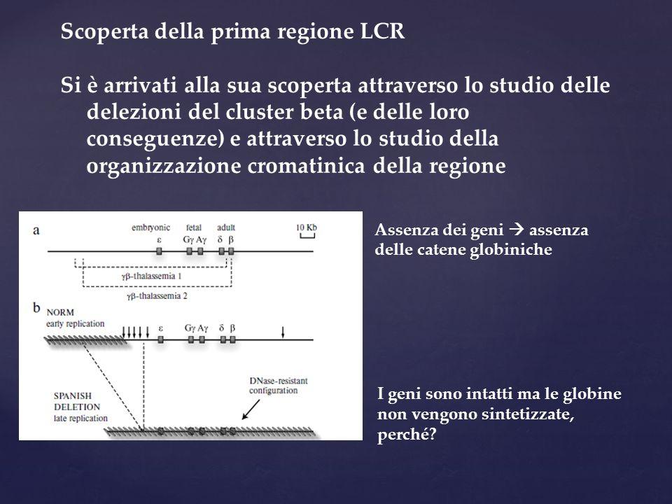 Scoperta della prima regione LCR