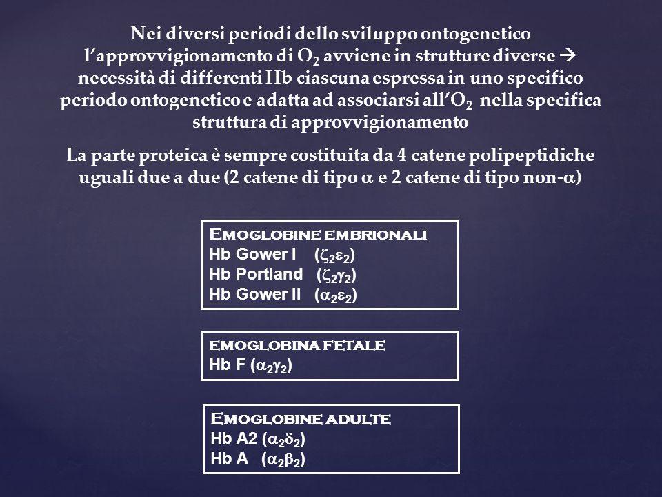 Nei diversi periodi dello sviluppo ontogenetico l'approvvigionamento di O2 avviene in strutture diverse  necessità di differenti Hb ciascuna espressa in uno specifico periodo ontogenetico e adatta ad associarsi all'O2 nella specifica struttura di approvvigionamento