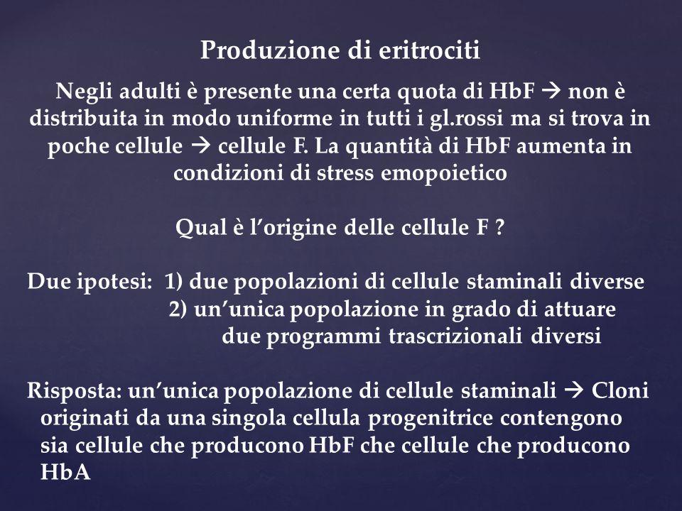 Produzione di eritrociti Qual è l'origine delle cellule F