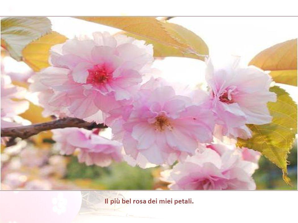 Il più bel rosa dei miei petali.
