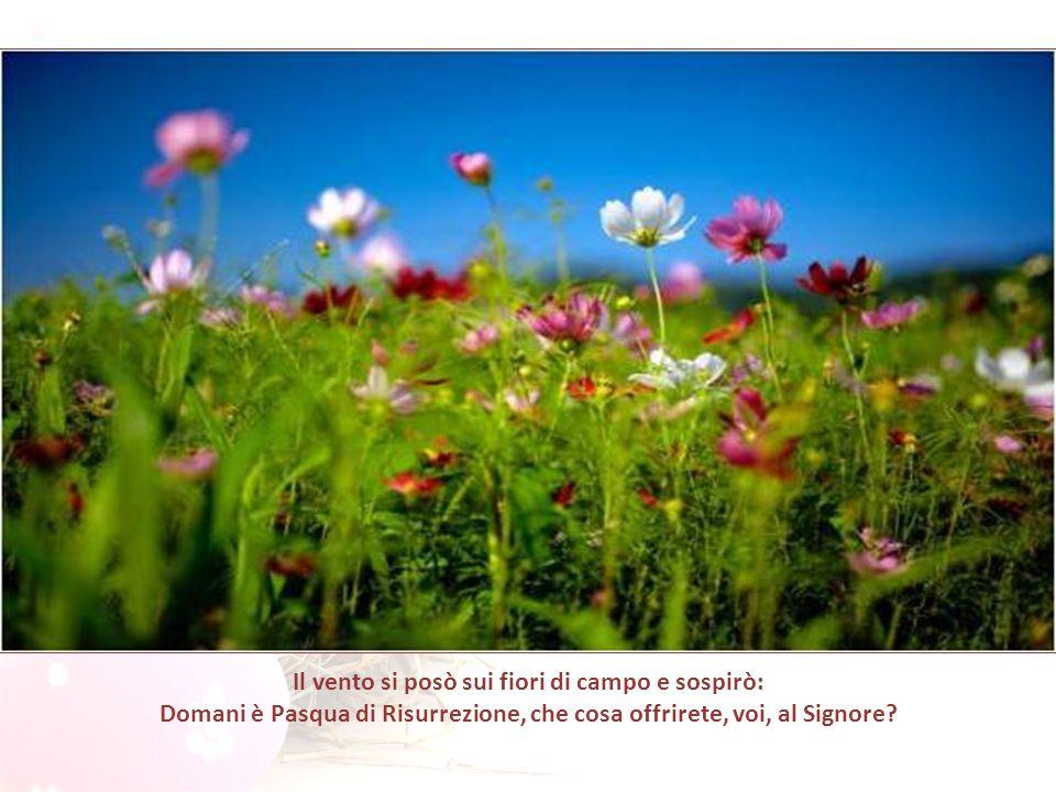 Il vento si posò sui fiori di campo e sospirò: Domani è Pasqua di Risurrezione, che cosa offrirete, voi, al Signore