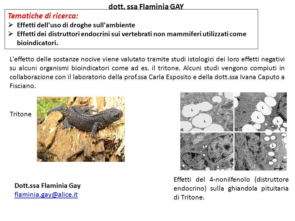 dott. ssa Flaminia GAY Tematiche di ricerca: