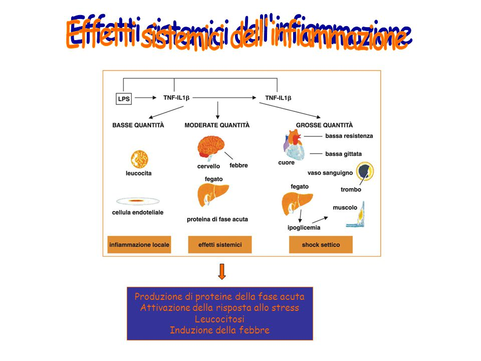 Effetti sistemici dell infiammazione