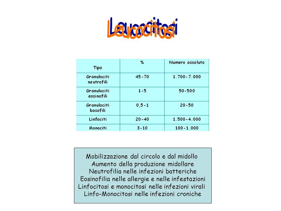 Leucocitosi Mobilizzazione dal circolo e dal midollo