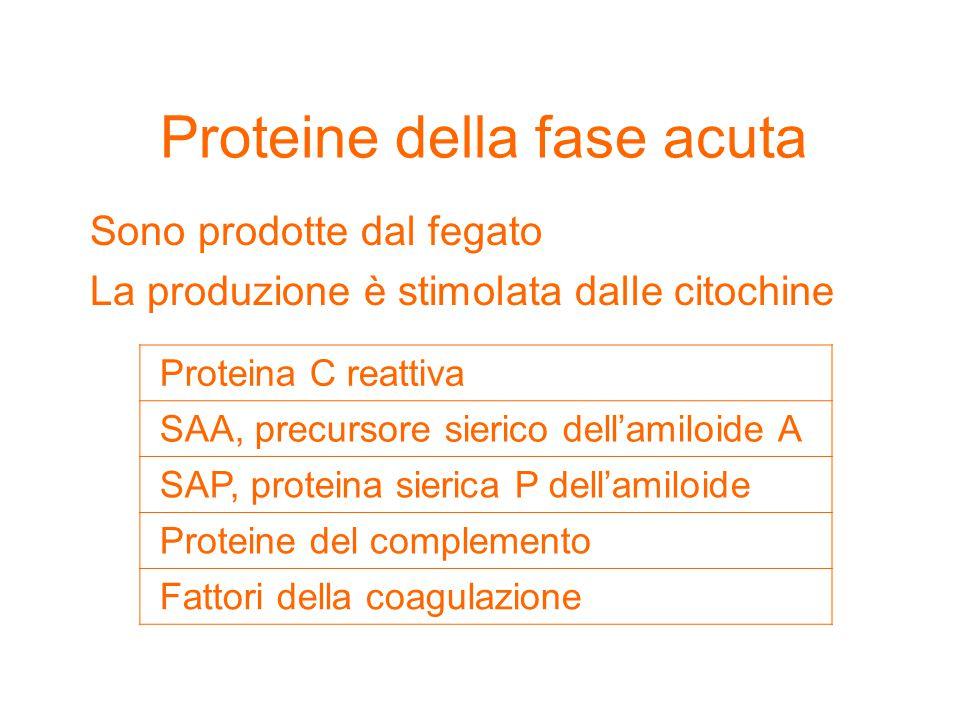Proteine della fase acuta