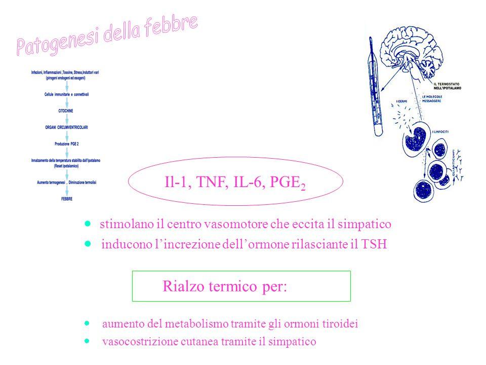 Patogenesi della febbre