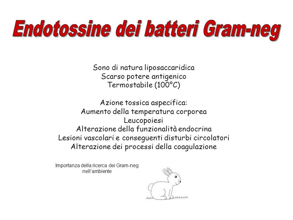 Endotossine dei batteri Gram-neg