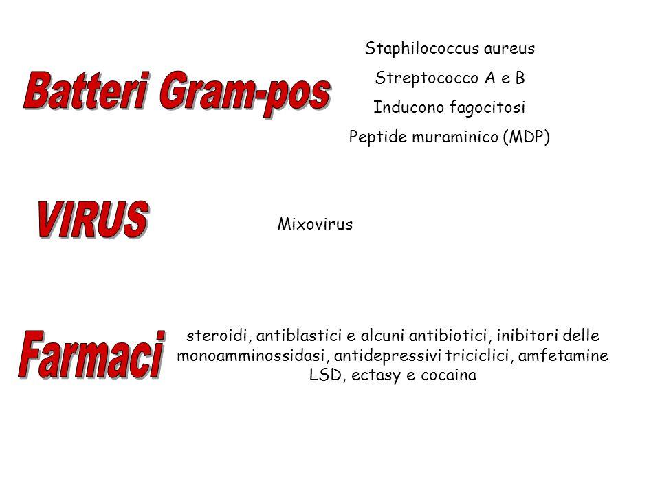 Batteri Gram-pos Farmaci VIRUS Staphilococcus aureus