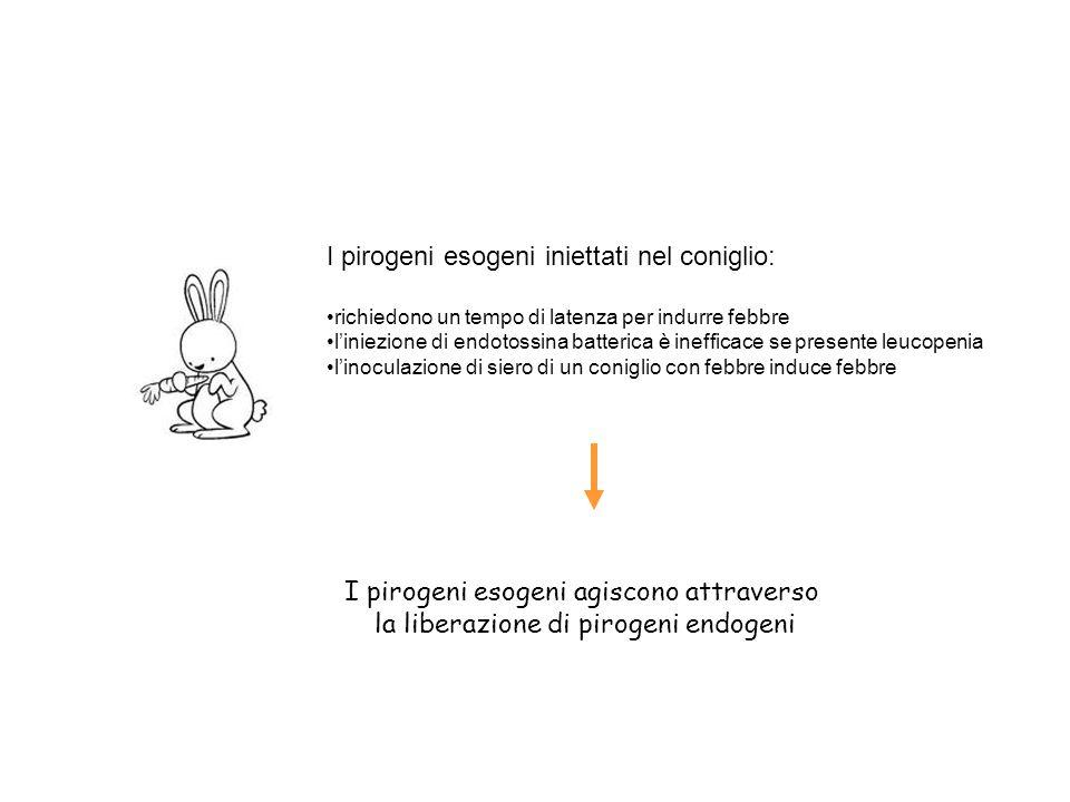 I pirogeni esogeni iniettati nel coniglio:
