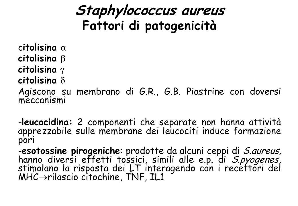 Staphylococcus aureus Fattori di patogenicità