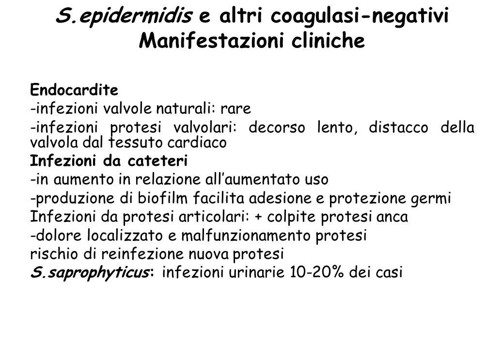 S.epidermidis e altri coagulasi-negativi Manifestazioni cliniche