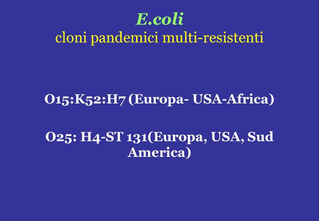 E.coli cloni pandemici multi-resistenti