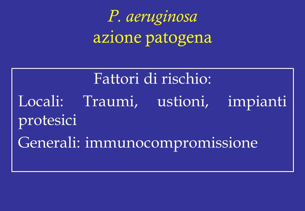 P. aeruginosa azione patogena