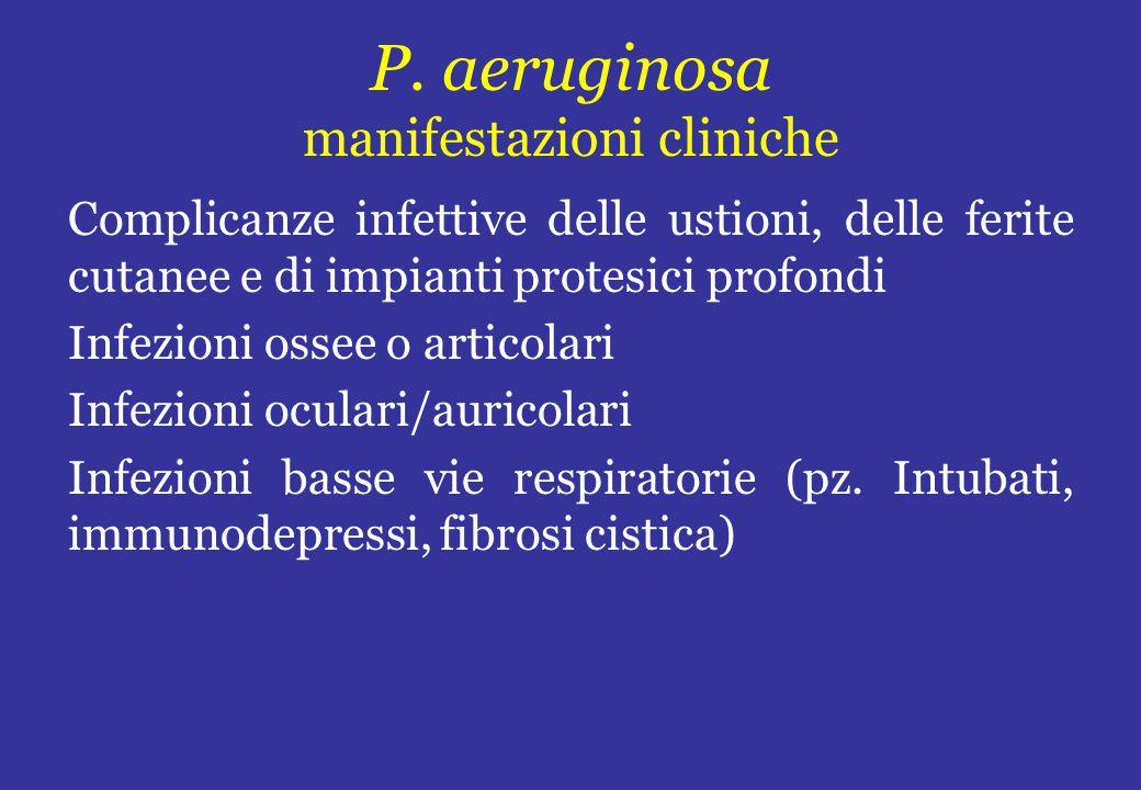 P. aeruginosa manifestazioni cliniche
