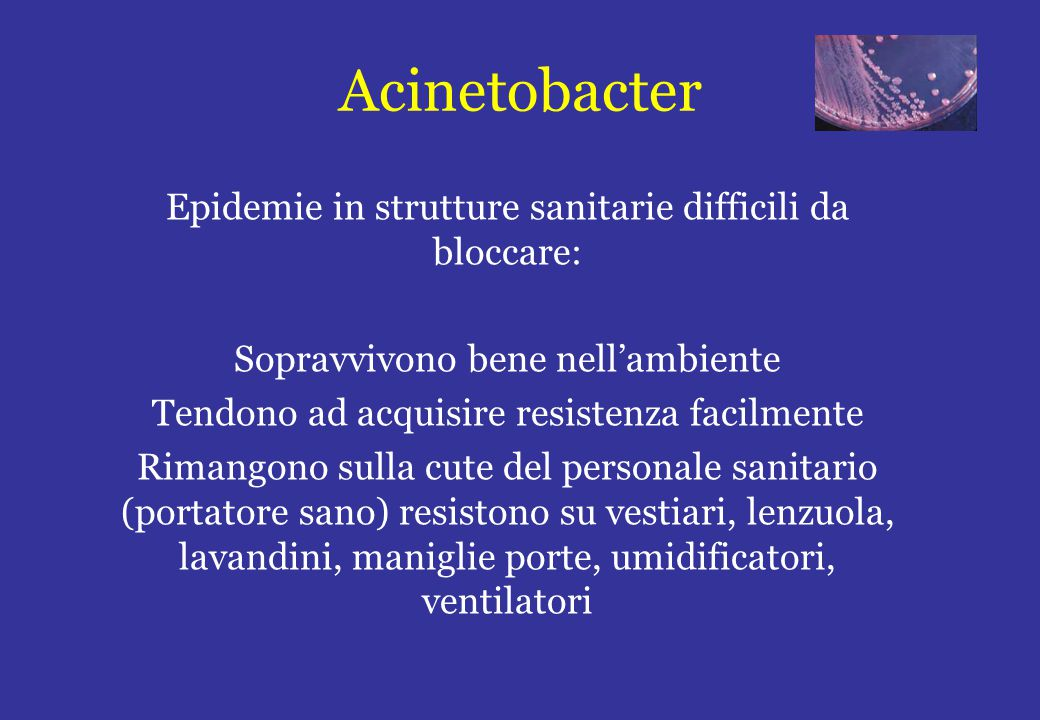 Acinetobacter Epidemie in strutture sanitarie difficili da bloccare: