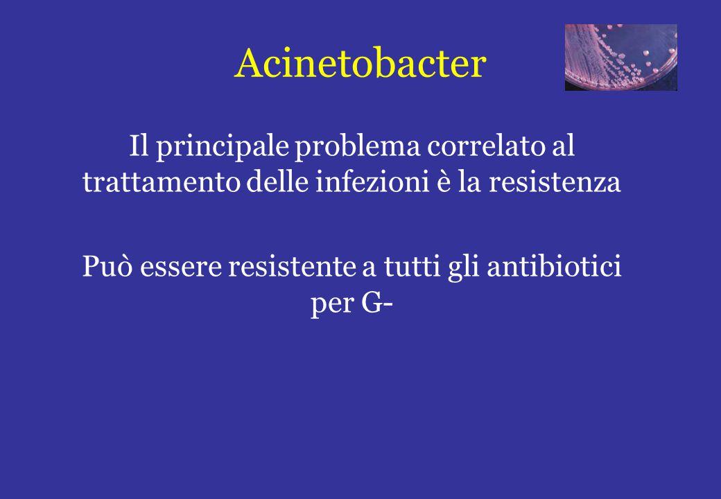 Può essere resistente a tutti gli antibiotici per G-
