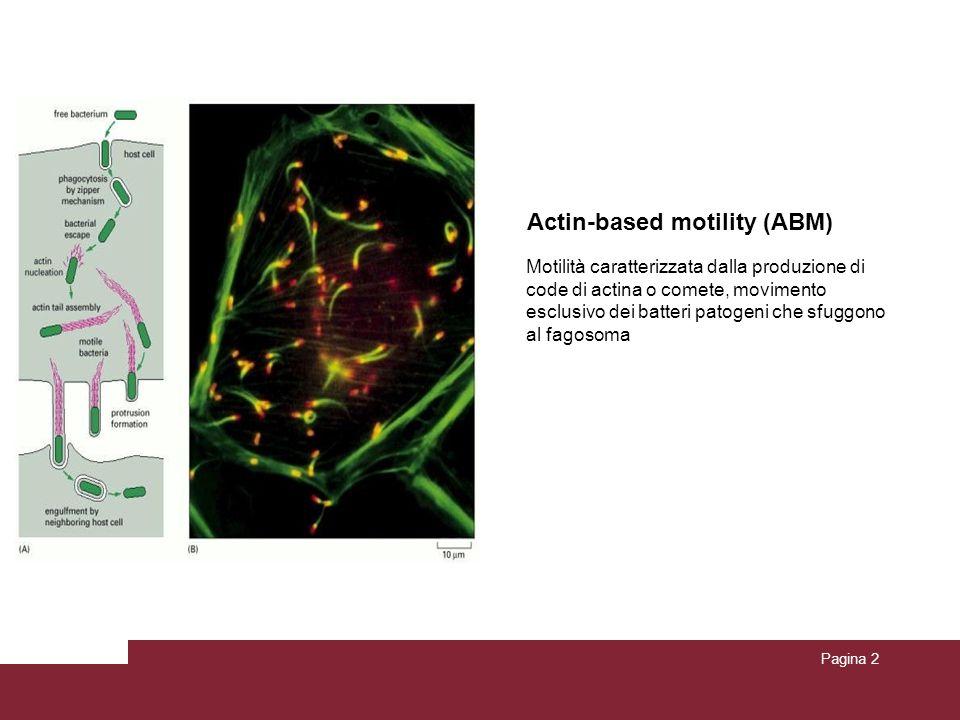 Actin-based motility (ABM)