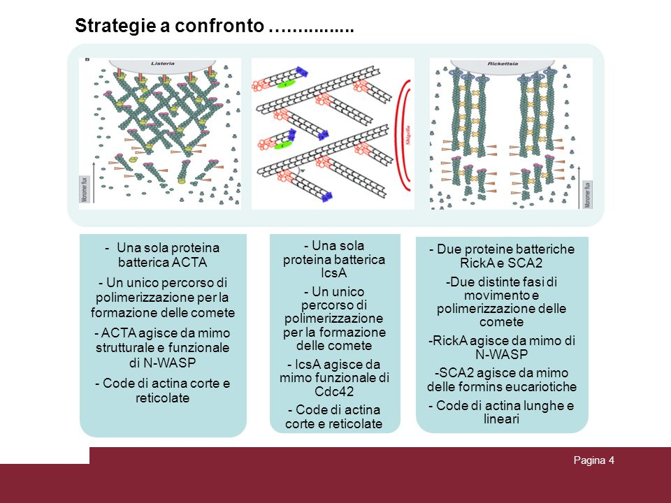 Strategie a confronto ….............