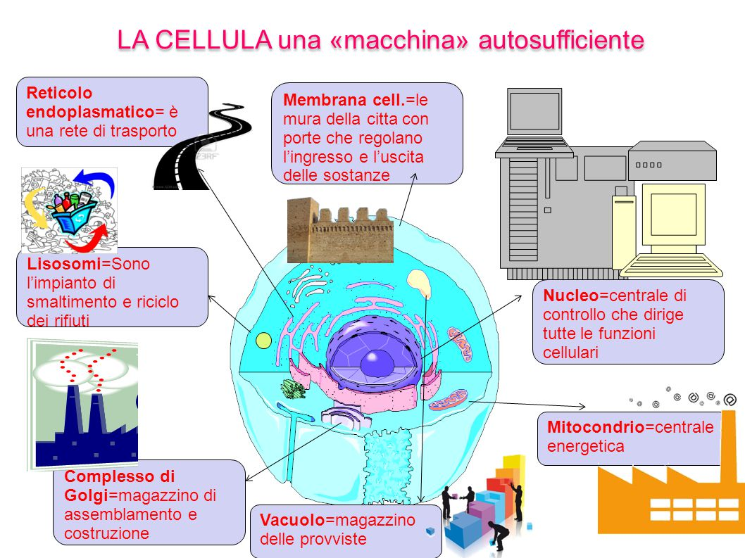 LA CELLULA una «macchina» autosufficiente