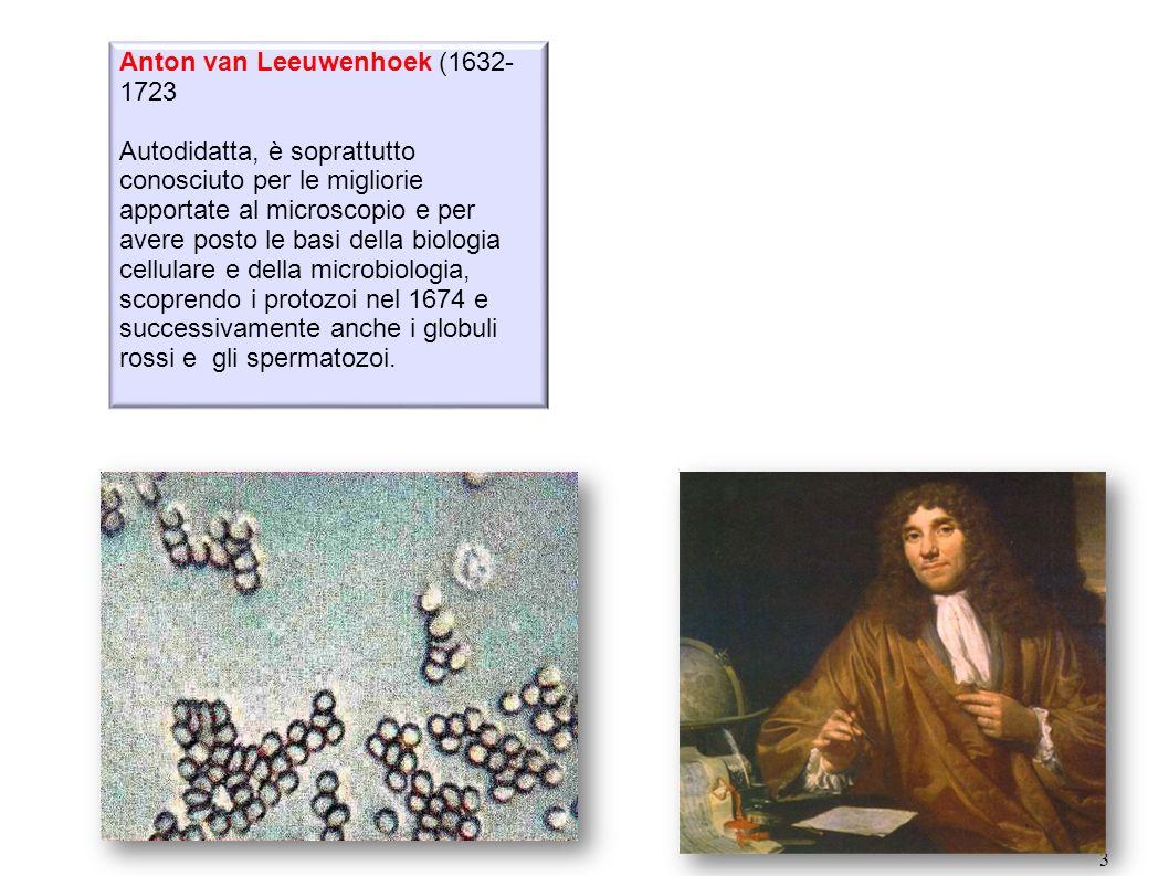 Anton van Leeuwenhoek (1632-1723